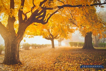 seasons of nauvoo calendar nauvoo main street fall leaves by tom simpson photography